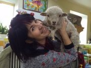 Карликова декоративна вівця ,  декоративні міні барашки